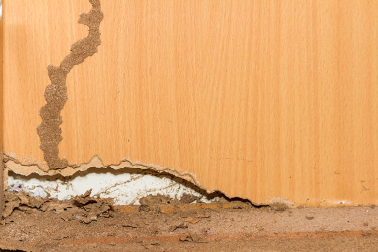 Austin, TX Termite Inspection